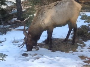 A straggler who didn't want to take part in our ice-breaking activities in Banff